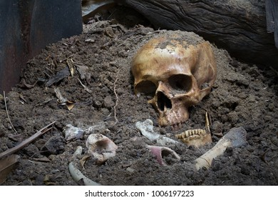 Skull and bones digged from pit in the scary graveyard / Still life and art image