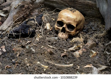 Skull and bones digged from pit in the scary graveyard which has dim light / Still life and art image
