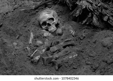 Skull and bones digged from pit in the scary graveyard which has dim light / Still life and art image, and adjustment color black and white