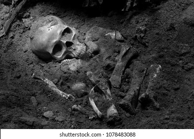 Skull and bones digged from pit in the scary graveyard which has dim light / Still life and art image adjustment color black and white style