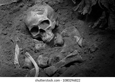 Skull and bones digged from pit in the scary graveyard which has dim light and adjustment color black and white for background