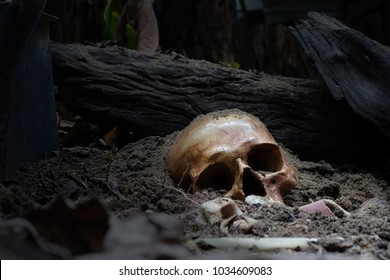 Skull and bones from pit in the scary graveyard / Still life and selective focus