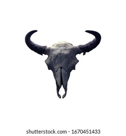 Skull of a buffalo isolated on a white background. Gray bones of a bull.