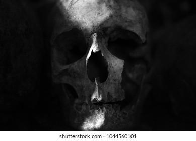 Skull Catacombs Paris