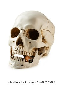 Skull with a cigar and smoking on white background. Health danger concept