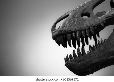 Skull of dinosaur T-Rex with free background