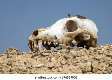 Skull of a dog lies on a hillock against a blue sky background