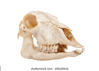 Horse Skull Images Stock Photos Vectors Shutterstock
