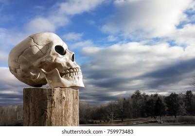 Skull Facing Sky
