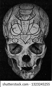 Skull of Gall, seen from the front, vintage photo. From the Universe and Humanity, 1910.