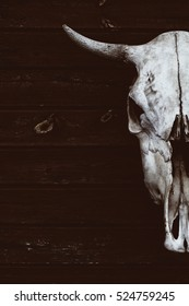the skull with horns of a bull or cow. fearful skull.