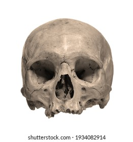 Skull of the human isolated on a white background. Sepia color photo