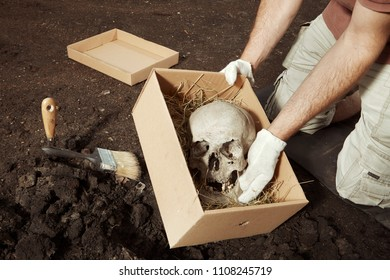 Skull of human skeleton packed to box for transportration on summer terrain excavations in field location