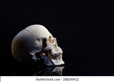 skull isolated on black background