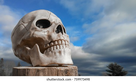 Skull Looking Into The Sky