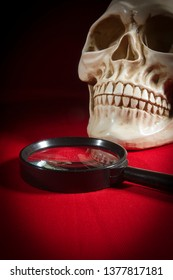 Skull and magnifier on a red coated table