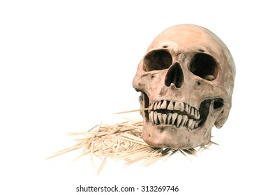 Skull model with Bamboo toothpicks isolated on white background.