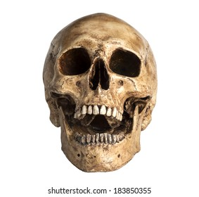 skull model in open the mouth pose isolated on white background