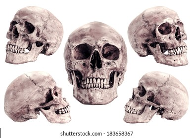 Skull model set  on isolated white background