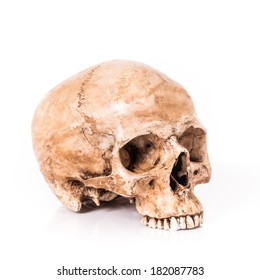 Skull model without jaw bone on isolated white background