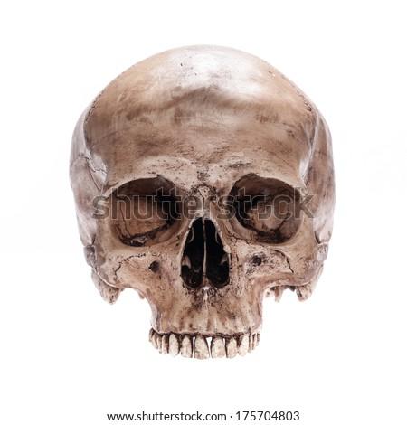 skull model without jaw bone 450w 175704803 skull model without jaw bone on stock photo (edit now) 175704803