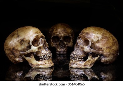 Skull on a black background.