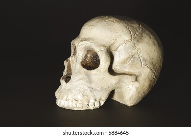A skull on the black background