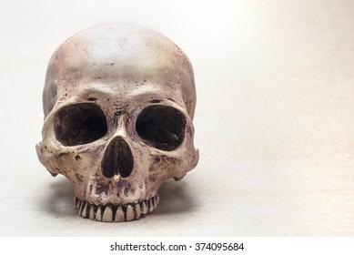 skull on brown vintage paper