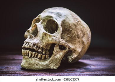 skull  on the brown wooden floor still life style