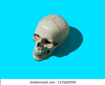 Skull on color background