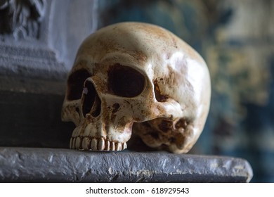 A skull on display on top of a mantelpiece.