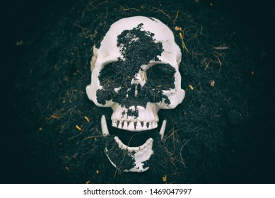 Skull on ground soil background / scary grunge human skull vintage style