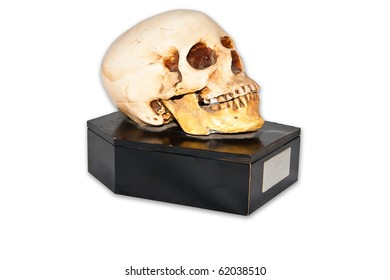 Skull on small casket isolate on white background