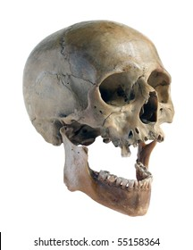 Skull of the person close-up on a white background.
