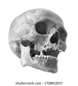Skull of the person on a white background. Black and white photo