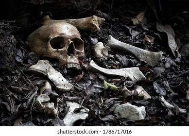 The skull and pile of bone on decay leaf in pit the old graveyard whith has dim light and dark  / Select focus, Still life image