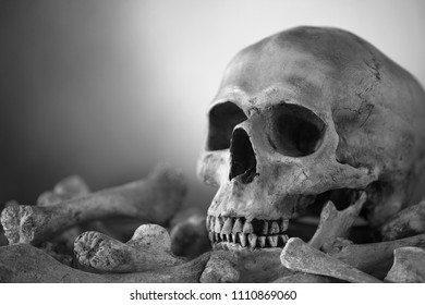 Skull and pile bones put on the wooden plank which has image moonlight on the wall background Black and white style/ blurred and selective focus, Still Life Image and space for texts