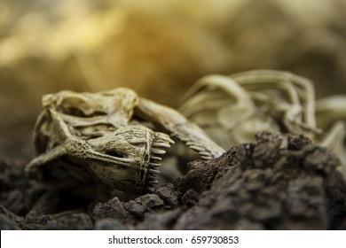 Skull skeleton carcass of dinosaurs Tyrannosaurus ( t-rex ) Dead and extinct on the ground.