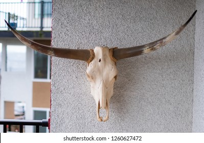 The skull of a texas longhorn hangs on the wall