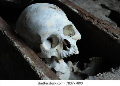 Skull toraja indonesia
