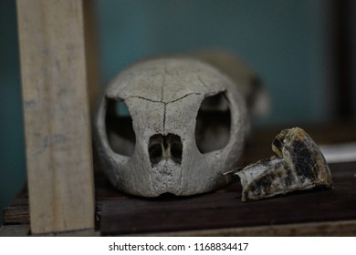 Underwater Skull Stock Photos, Images & Photography
