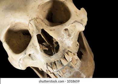 Skull w/Clipping Path (Diagonal Front View)