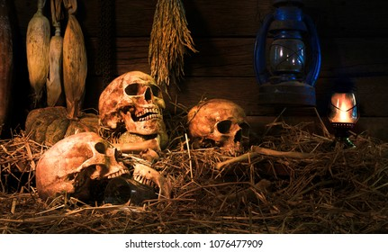 Skulls and bones on pile of straw with dim light of the old lantern and wooden background in the barn, concept of scary crime scene of horror or thriller movies,Halloween theme, visual art ,still life