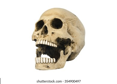 skulls on white background