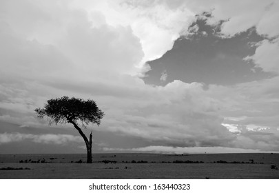 The sky above the savannah after the storm on the Masai Mara National Reserve - Kenya (black and white)