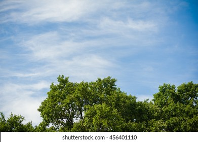 the sky above the trees in the forest