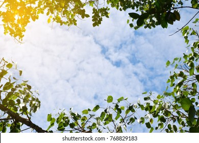 Sky background and leaves
