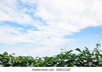 Sky background with tree bush foreground