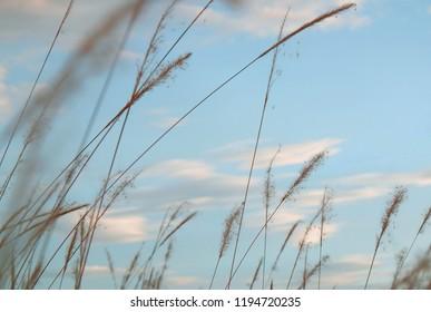 sky blue with grass coler white