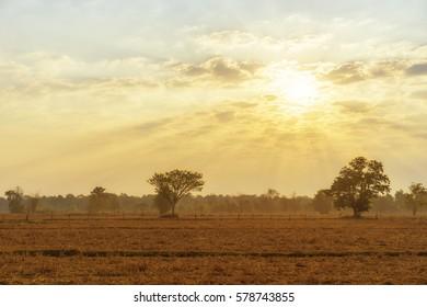 sky, cloud, rising sun, cornfield, abstract, background